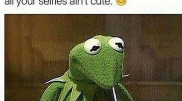 funny kermit pictures